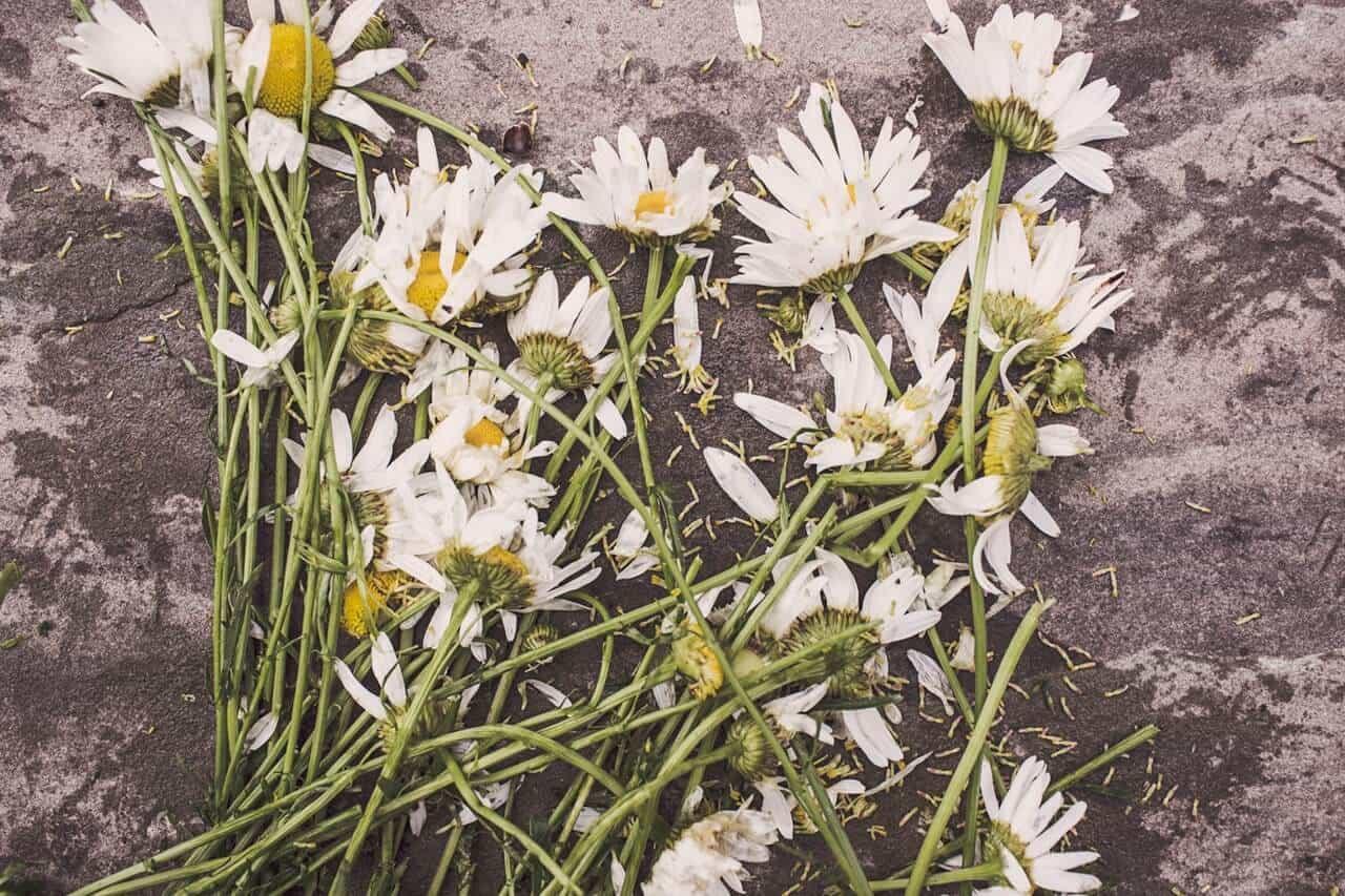 Sobre a morte e suas imposições